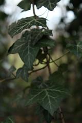 IMG_8887 (Geoff_B) Tags: badockswood bristol walkinthewoods autumn november unprocessed unedited