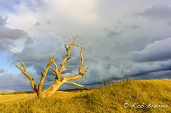 Holland / Nederland Landschap Noordhollands-duinreservaat (rob.bremer) Tags: landscape landschap landschappen noordhollandsduinreservaat noordholland castricum duinen dunes duinlandschap infiltratiegebied tree deadtree boom dodeboom kennemerduinen wolken clouds