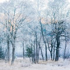 Morgenstimmung (zanettifoto) Tags: wiese laubbaum baum herbst laubwald inn morgen raureif graubnden himmel morgensonne schweiz schnee celerina che