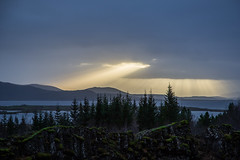 Rays (Gigin - NoDigital) Tags: iceland plant thingvellir sunset nature sun europe trees geography