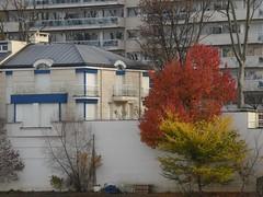 Derniers feux Last fires (alainpere407) Tags: alainpere paris automne autumn fall trees arbres vividstriking iledelagrandejatte
