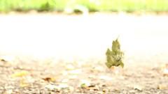 2C0A6303 (L)eavesdropping, Jon Perry - Enlightenshade, 23-8-15 zan (Jon Perry - Enlightenshade) Tags: film movie leaf video dancing wind web spinning hanging highkey breeze spidersweb eavesdropping 23815 blowinginthewind jonperry enlightenshade arranginglightcom 20150823