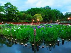 Parc Yamada (ismaelmohamedlaamiri) Tags: fleur vive jardin vert  japon verdure