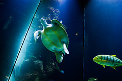 Under the sea #2 (Paul Wiethlter) Tags: vienna blue sea fish green water turtle sony under