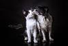 Zelda & Abby (Clarissa Scheffler) Tags: dog love cat und kiss fotografie friendship give photograph katze catsdogs freundschaft liebe pest schwarzweis mögen küsschen petslove pinselpfoten