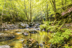 Green of forest (Nejdet Duzen) Tags: trip travel reflection tree nature forest turkey stream türkiye ağaç yansıma dere orman turkei tesvikiye seyahat yalova doğa çınarcık