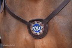 Brigade équestre (Police Nationale) Tags: chevaux dcsp brigadeéquestre sécuritépublique