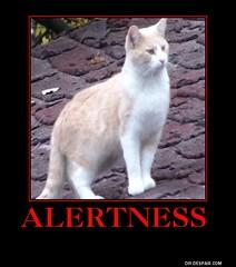 Alertness meme (dylan.unknown5150) Tags: cats poster meme alert alertness