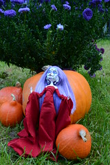Monster high calavera la reine des citrouilles (alixir2.0) Tags: monster high mort calavera citrouille potiron halloween ooak doll muerte alixir