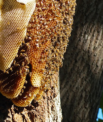 Bee hive at local park. (thinduck42) Tags: tree nature insect bees panasonic hive beehive fz200
