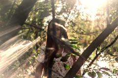 Sunlight (Mnimaia) Tags: trees light sun art forest photography model photographer swamps marais