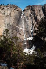 Yosemite (kielan prince) Tags: winter cliff snow tree ice yosemitefalls water pine canon waterfall yosemite redwood redwoods yosemitenationalpark pinetrees upperyosemitefalls 35l 5dmarkii