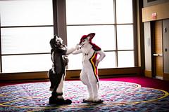 _MG_1593-1 (loboloc0) Tags: atlanta animal fur furry weekend suit convention con fursuit fwa furcon suiter