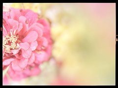 detail (katabbey) Tags: flowers floral nature plants outdoorphotography pink green bokeh