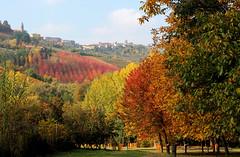 Autunno in Langa (katefoto-) Tags: diano alba langhe langa colori autunno colline boschi vigne foglie natura