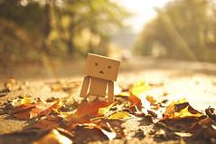 Danbo having fun! (DannyBradley) Tags: autumn fall light danbo danboard