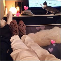 Jetzt schn gemtlich machen ...viel Zeit ist nicht mehr, da Schatz schon bald wieder los muss zur Arbeit ...aber genieen den restlichen Abend noch gemeinsam  #relax #funnycat (biancawirmannbakker) Tags: relax funnycat