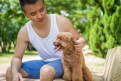 20160624-62 (RuMax 2010) Tags: 20160624 寵物寫真 cocha 紅貴賓 攝影推薦 寵物拍照 rumax