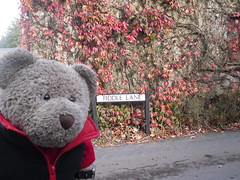 Wot street sine??? (pefkosmad) Tags: tedricstudmuffin ted teddy bear holibobs holiday vacation vacances tourism travel piddletrenthide piddle valley dorset littlebriar selfcatering cottage week village cute soft stuffed toy cuddly plush fluffy exploring
