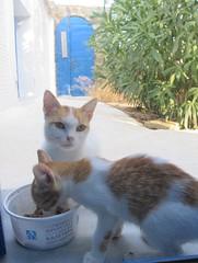 pranzando sotto lo sguardo attento della mamma (ermyale) Tags: grecia cat andros ciclida