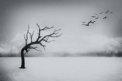 Desolate (Vicki Luckins) Tags: birds bent black white clouds