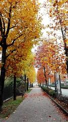 Autunno #autunno #autumn #caravaggio #bergamo #caravaggiocity (elena.zibetti91) Tags: bergamo caravaggio caravaggiocity autumn autunno