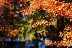 _DSC2553 (BrettGV) Tags: autumn sonnart18135