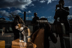 London stories (stromin.alex) Tags: street streetphotography dog documentary reflection london reportage photojournalism
