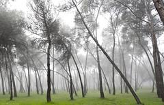 IMG_8305 (Juan Manuel Sanchez) Tags: otoo adrianospicture juanmanuelsanchez hojas arce rojo niebla fog campo montaa madrid espaa canon d60 naturaleza maana cielo silueta contraluz cesped hierba bosque norte