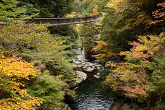 34Mitarai Valley (anglo10) Tags:    bridge japan    valley  autumnleaves