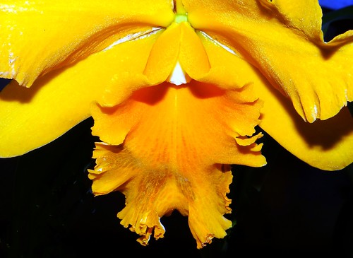 ORCHID  #28
