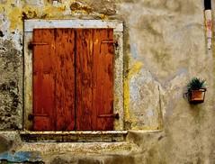 Please water me / Innaffiami per favore (Giorgio Ghezzi) Tags: shutter imposta window finestra giorgioghezzi