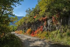 nature on fire (dimz2607) Tags: fort saou automne orange rouge couleurs arbres
