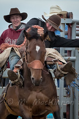 Vulcan Rodeo 2015 (tallhuskymike) Tags: rodeo vulcan fca foothillscowboysassociation horse action alberta event outdoors 2015 cowgirl