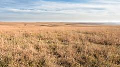 Tallgrass Prairie (JLDMphoto) Tags: nikon d7200 14mm tallgrass prairie nps nationalparks kansas reserve flinthills pasture native grass greatplains landscape nature cc creative commons exposure light sunshine hills sky clouds park