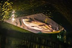 Dissolving II (Tore Thiis Fjeld) Tags: norway elvelangs akerselva oslo dissolving photo river water liquefy floating installation artwork nikon d800 sigma 50mm f14 dg hsm art
