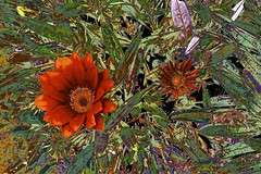 Abstracted Flora! (maginoz1) Tags: flower flora abstract art manipulate orange spring october 2016 auckland newzealand canon g3x