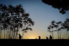 (massimopisani1972) Tags: appia antica via viaappiaantica appiaantica roma rome italia italy massimopisani massimo pisani ombre shadows silhouette family famiglia tramonto sunset nikon d610 20300