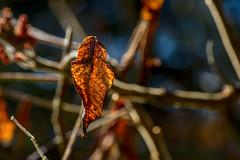 Fall Harmonic (Warm)
