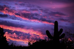 Sonora (Dawnsview) Tags: sonoradesert saguaro arizona bright blue colors clouds cityscape cactus dawnsview dawn dusk desert exotic k5 sky landscape light morning nature outdoors pentax twilight tucson