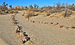 Joshua Tree 2 (Starkrusher (On the road again)) Tags: nationalpark joshuatreenationalpark joshuatree desert california