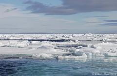 Arctic Pack Ice (Robert Horne Wildlife Photography) Tags: arcticpackice packice driftice seaice ice arctic arcticcircle svalbard arcticocean