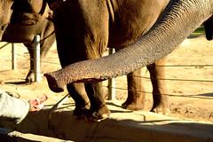 Hamburg,Tierpark Hagenbeck (Germany) (jens_helmecke) Tags: hamburg stadt hansestadt city tierpark zoo hagenback elefant tier animal nikon jens helmecke deutschland germany