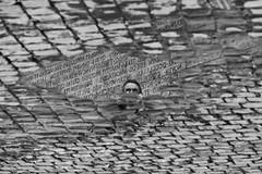 """La """"specchiata"""" permanenza del Latino (photograph61) Tags: pozzanghera latino"""