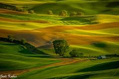 _MG_0416 (judikubes) Tags: palouse washington farm barn trees shadows greenfield green rollinghills dirtroad