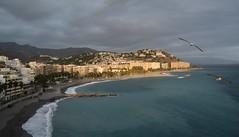 A Vista de Pjaro (Toms Hornos) Tags: gaviota pjaro bird vuelo beach playa sea mar azul almucar costatropical airelibre