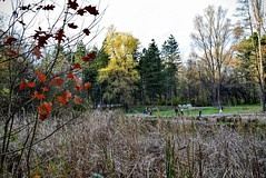 Late Autumn Lake in the Park DSC_0813 (Me now0) Tags: autumn afternoon park europe nikond5300 basiclens 1855mmf3556 lake есен следобед юженпарк софиябългарияевропа никонд5300 китовобектив езеро