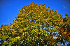 HerbstStillLeben (Michael Döring) Tags: gelsenkirchen bismarck marschallstrase herbststillleben goldeneroktober ais50mm12 d800 michaeldöring