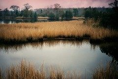 R2-22-9A (David Swift Photography Thanks for 19 million view) Tags: davidswiftphotography newjersey southjersey wetlands marsh water ponds lakes forrest 35mm film scenic nikonf2 fujicolor