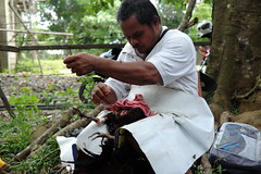 The chicken doctor (Fergus Brooks) Tags: doctor vet philippines cock fighting palawan filipino brutal adventure travel backpacking unseen asia explore